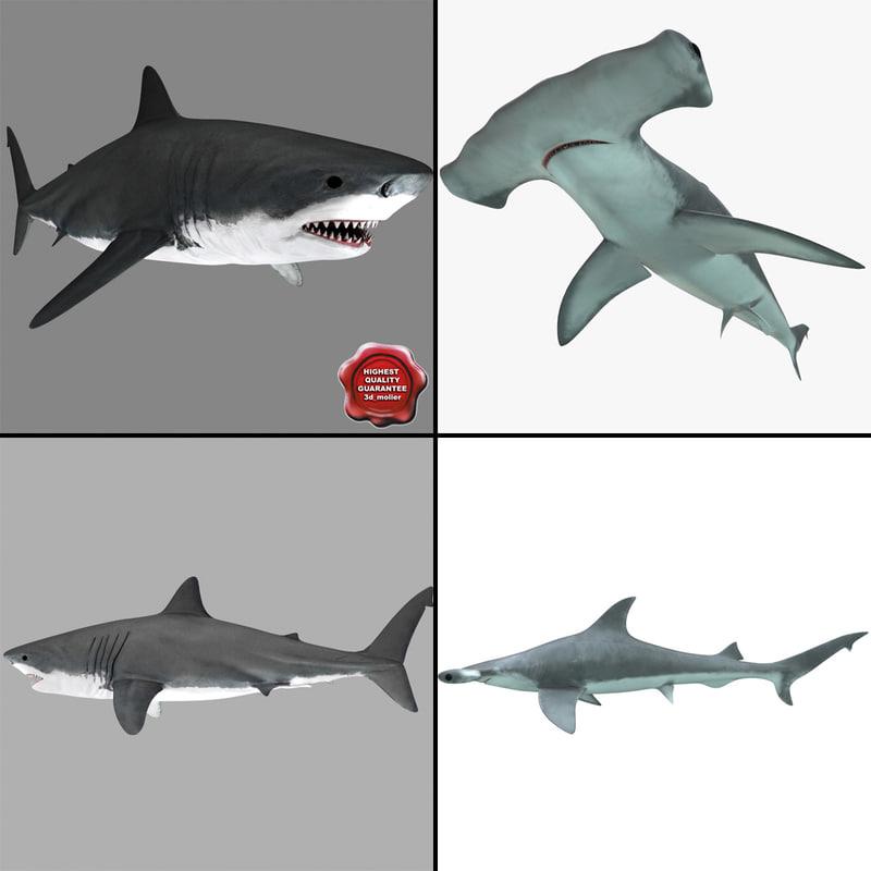 3d max sharks hammerhead modelled
