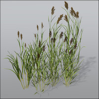 Reed grass Bundle1