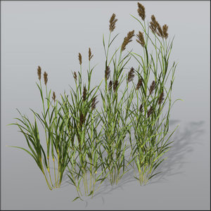 c4d reed grasses