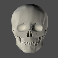 3ds anatomically human skull