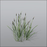 Corndog grass Bundle1