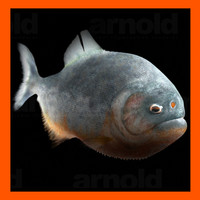 realistic piranha 3d model
