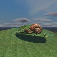 snail leaf 3d model