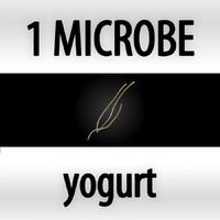yogurt - lactobacillus bulgaricus