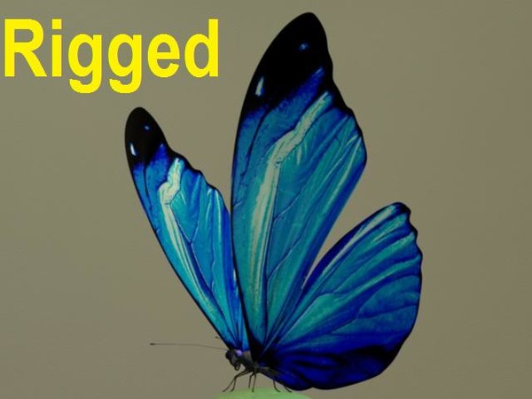 3dsmax butterfly