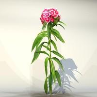Flower_073