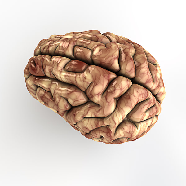 human brain 3d c4d