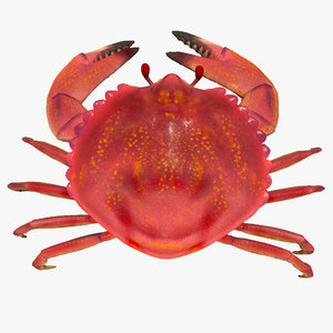 3d model small crab rigged