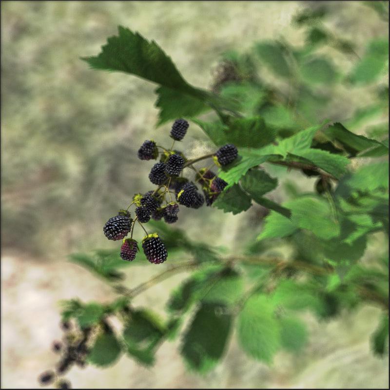 blackberry plants rubus 3d model
