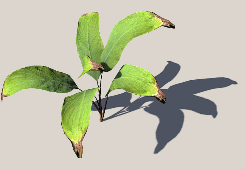 3d palm leaves model