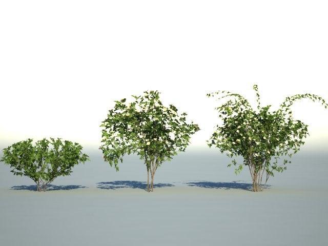 3d bushes model