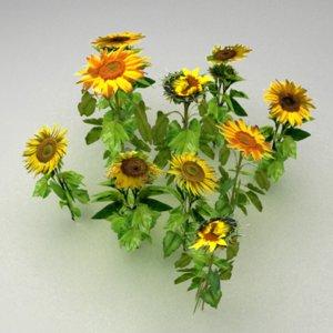 sunflower field max