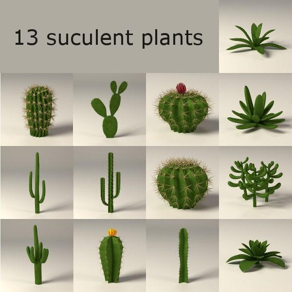 maya cactuses suculent