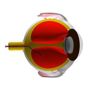eye 2008 3d model