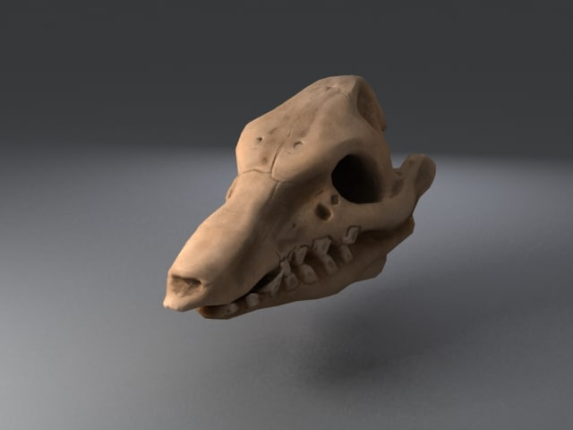 max pig skull