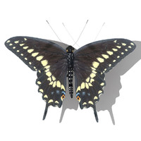 3d black swallowtail butterfly