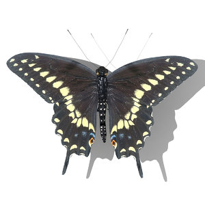 3d black swallowtail butterfly