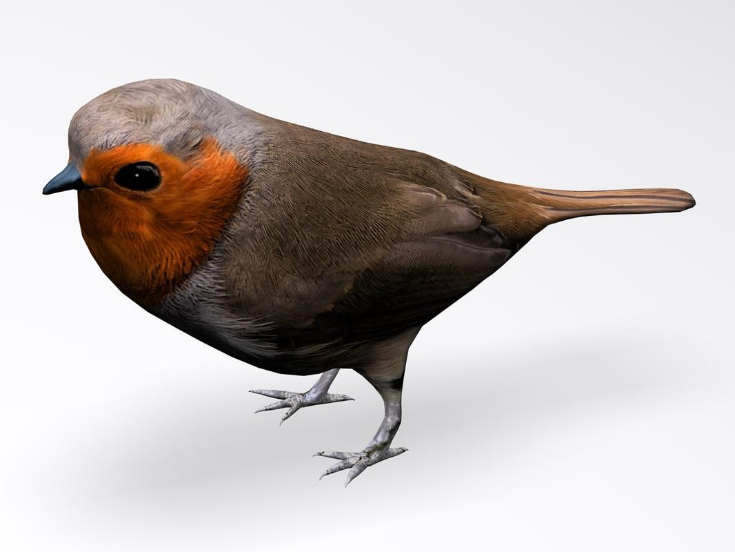 3d model european robin bird