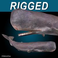 sperm whale 3d max