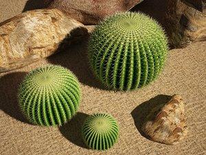 echinocactus cactus max