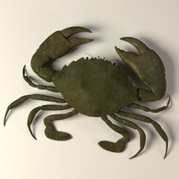 3d crab scylla serrata