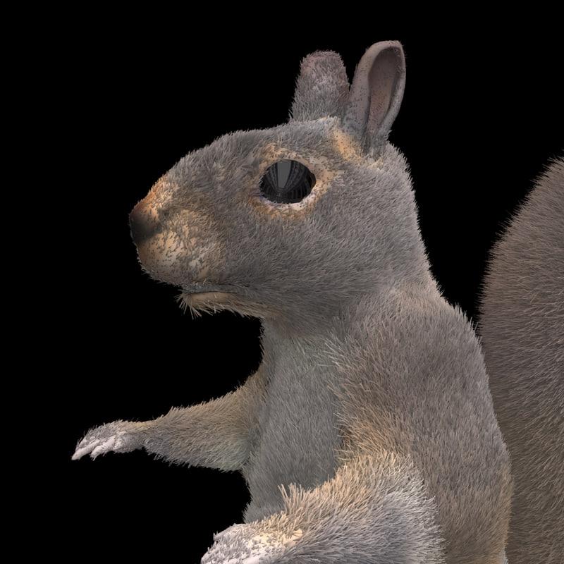 3d furry squirrel model