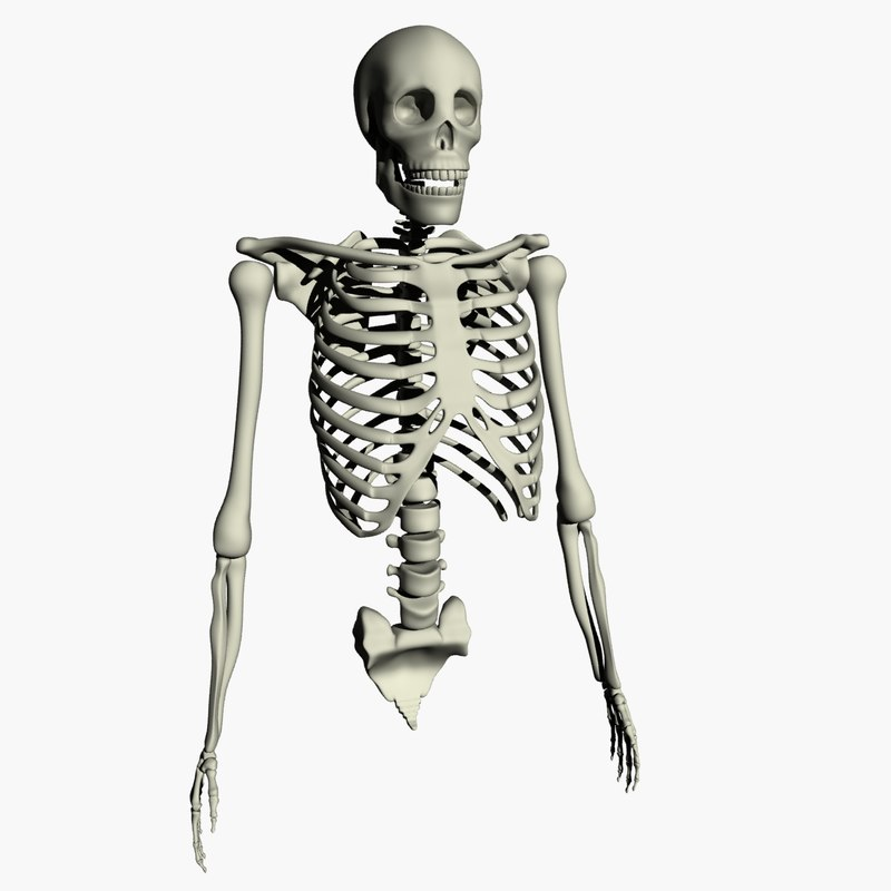 human skeleton 3d max