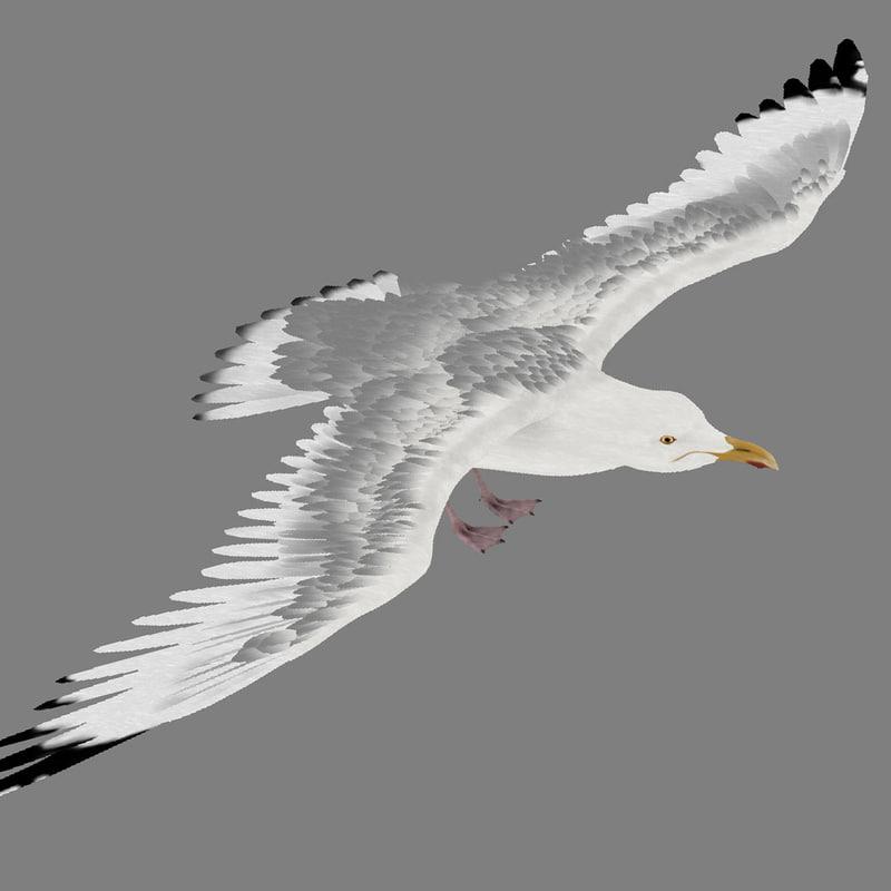 3d seagull gull animation model