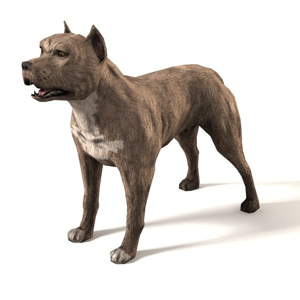 c4d pit bull dog
