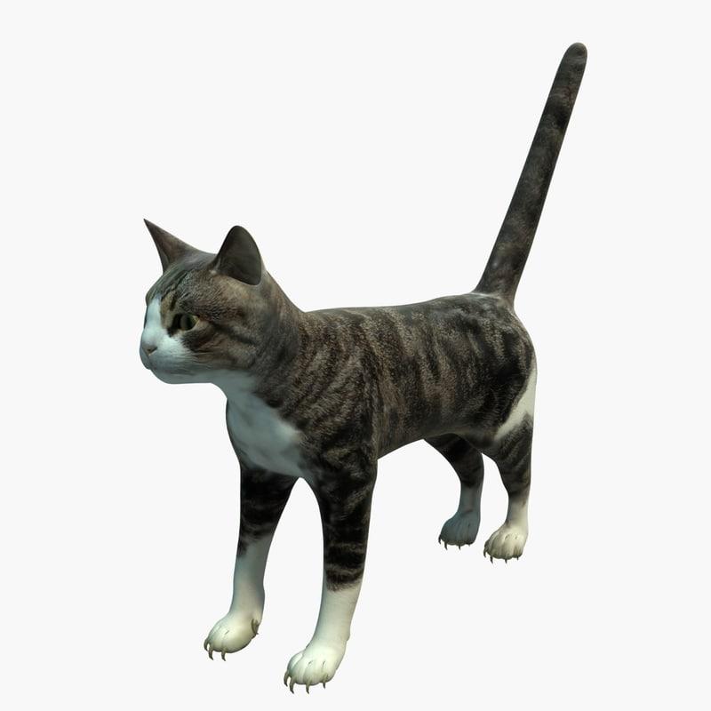 cat rigging obj