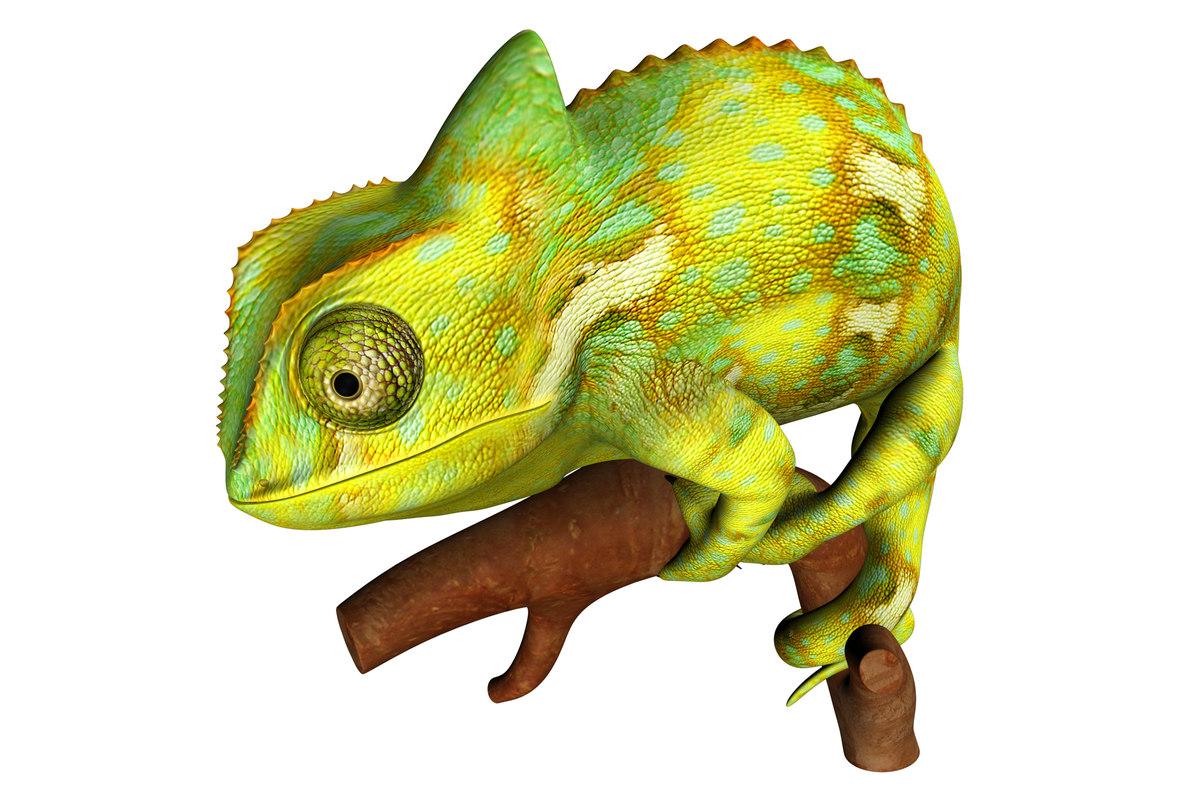 chameleons lizards obj