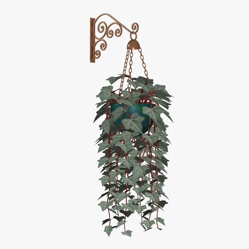 english ivy plants 3d model