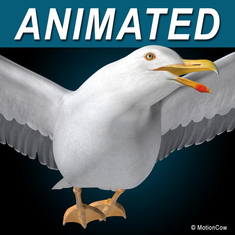 seagull flying 3d c4d