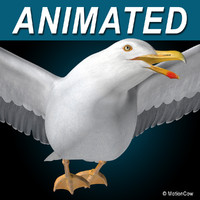 seagull flying 3d c4d