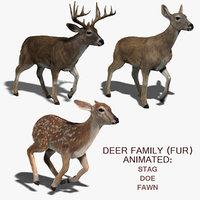 Deer Family (FUR) (ANIMATED)