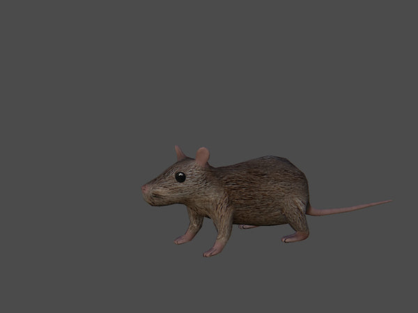 mouse max