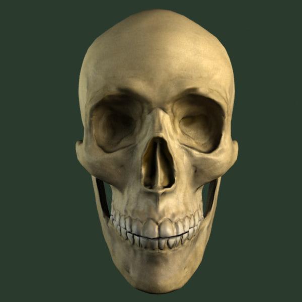 3ds max skull head anatomy