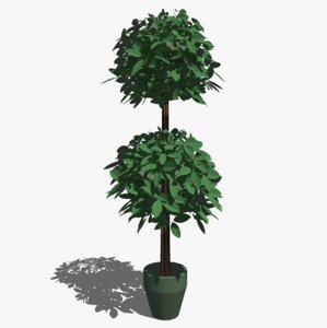 tree topiary sketchup 3d 3ds