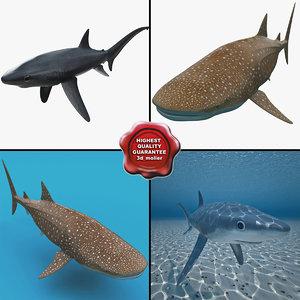 sharks v2 3d model
