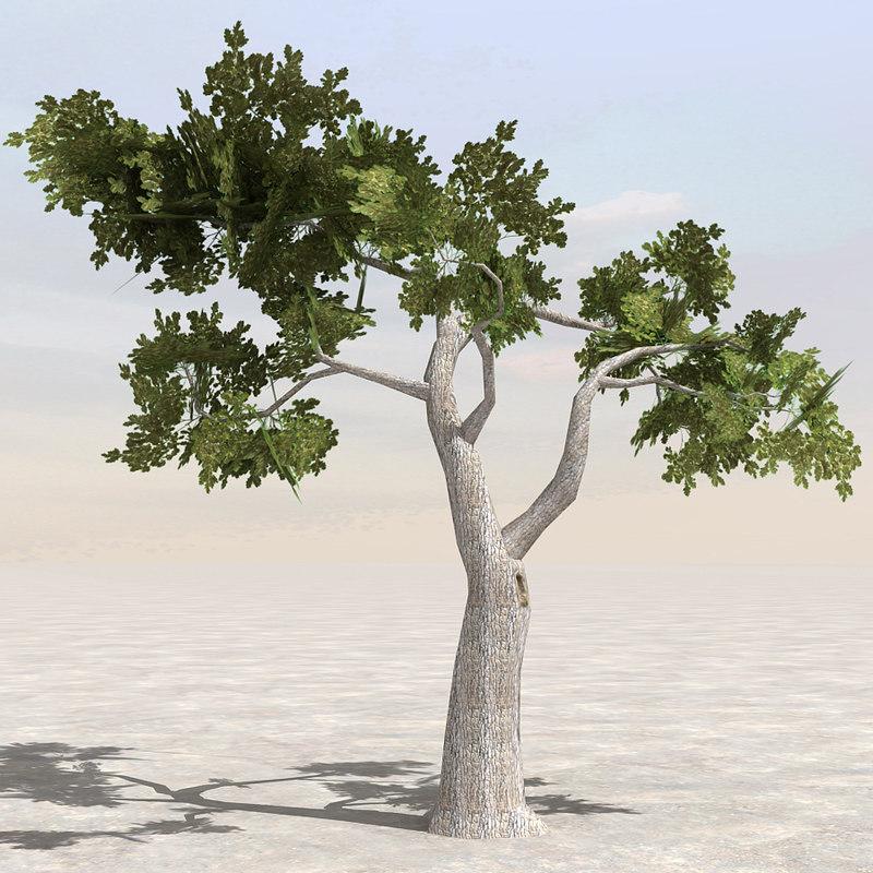 tree branch afghanistan 3d model
