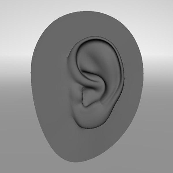 3d model of realistic human ear
