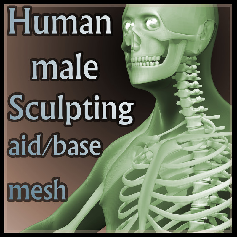 3d anatomical human body sculpt model