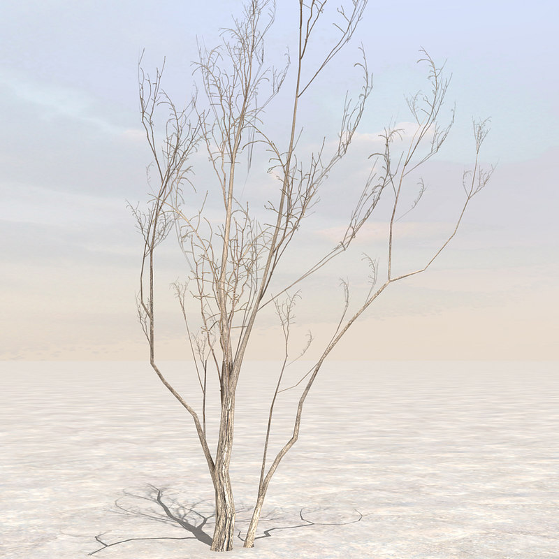 tree afghanistan 04 3d c4d