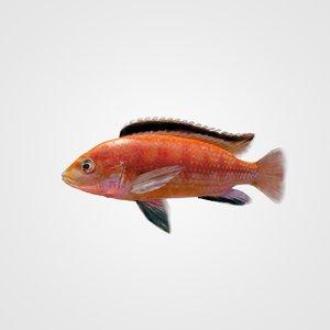3ds max aquarium fish cihlida labidochromis