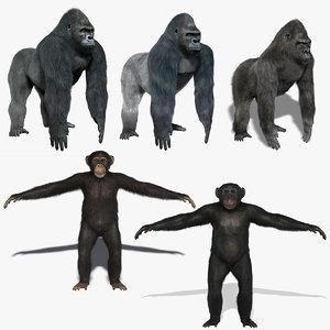 gorillas chimps fur 3d fbx