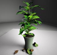 indoor plant 3d max