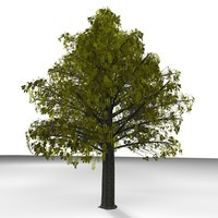 3d plane tree model