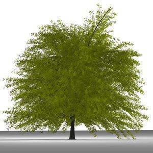 3ds plane tree