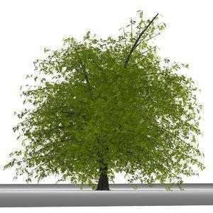 3d plane tree