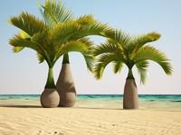 bottle palm(1)